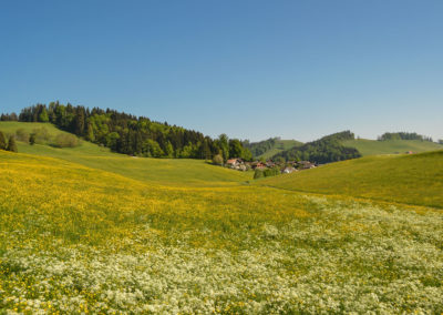 Grundbach-Laeger